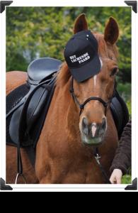 Diva_paard